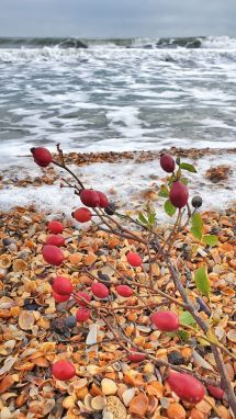 Cornel Geamănu - Recital de litoral-22-litoral autumnal