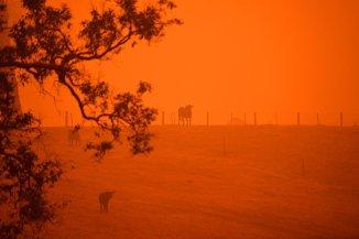 incendii-australia-