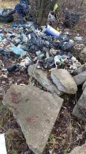 lucrari igienizare Primaria Mangalia-03