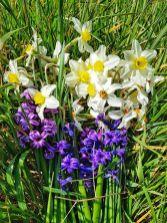 Auris Luca - buchet de flori pentru mama