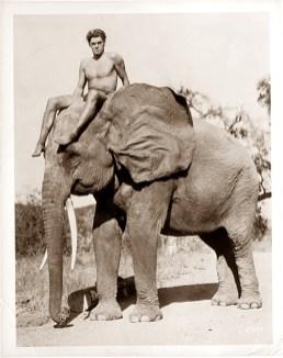 weissmuller-elefant