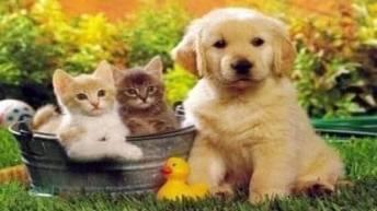 ziua mondiala a animalelor