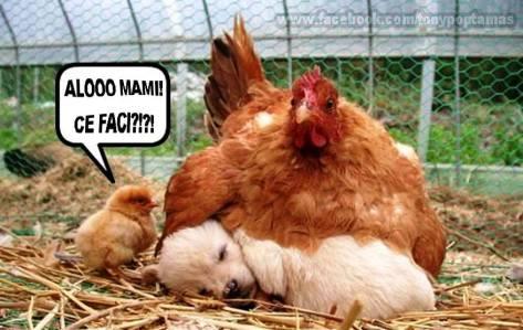 alooo-mami