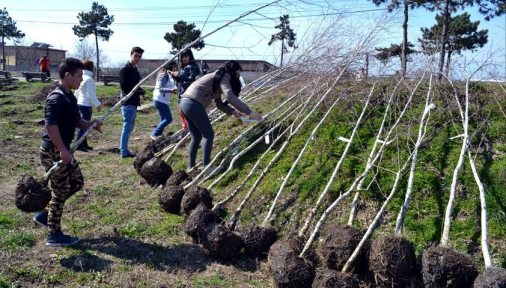 plantari-puieti-tinerii-liberali-mangalia-01