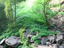 Arishinagundi_falls10