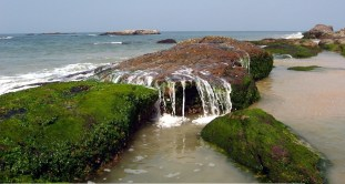Someshwara-beach-Ullal9