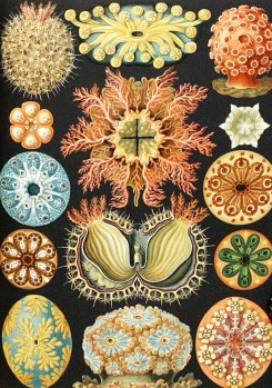 Image result for Ernst Haeckel, painting