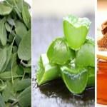 Conheça 6 antibióticos naturais que estimulam os mecanismos de defesa do seu corpo, Veja!