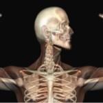 Conheça o verdadeiro segredo para ter ossos fortes.