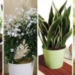 Plantas para pegar no sono que você pode ter no seu quarto