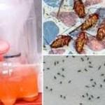 Incrível receita caseira que faz todos os mosquitos e baratas caírem mortos… Se livre pra sempre!