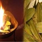 Surpreendente, você não imagina o bem que faz queimar folhas de louro em casa!