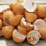 Descubra os segredos e benefícios de usar as cascas do ovo