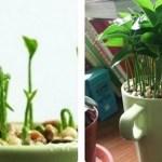 Aprenda a plantar limão num copo, a sua casa sempre terá um cheiro bom e decorativo