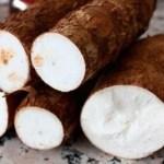 Troque o pão pela mandioca e veja todos estes benefícios para sua saúde saúde