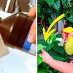 Por que muitas pessoas borrifam as plantas com água oxigenada?