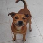 Campanha no Facebook encontra novo dono para cachorro de mulher com câncer terminal