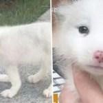 """Mulher compra """"cachorro fofo"""" em pet shop: mas um tempo depois, percebe que não era bem assim"""
