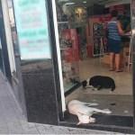 Cães entram em loja com ar condicionado para fugir do calor no RJ; 'nem eles estavam aguentando', diz funcionário