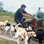 Homem viaja pelo seu país de bicicleta resgatando e cuidando de cães abandonados