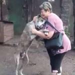 Cão perdido por anos finalmente encontra sua dona e emociona abrigo