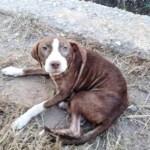 Um cão sem dono cuidou toda a noite de um homem idoso com Alzheimer que estava perdido