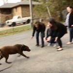 Cão desaparecido há 5 anos encontra sua família novamente