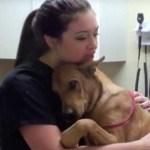 Cão é salvo 5 minutos antes do horário em que seria sacrificado