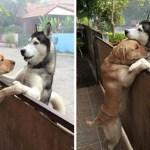 Cão solitário escapa de casa para abraçar seu melhor amigo