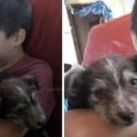 Menino de 7 anos salva filhote de cachorro que foi maltratado por outras crianças