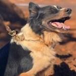 Morre cão que atuou no resgate e busca das vítimas em Brumadinho e Mariana