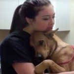 Cão é salvo 5 minutos antes de ser sacrificado