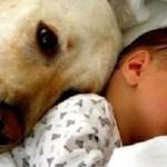 Cão salva bebê abandonado em saco plástico e vira herói