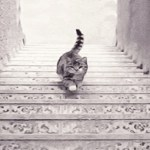 Teste de personalidade: o gato está subindo ou descendo a escada? Sua resposta definirá traços de sua personalidade