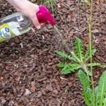 Veja como acabar com as ervas daninhas do jardim, usando sabão, sal e vinagre.