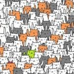 Você consegue encontrar um coelhinho entre os gatos?