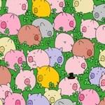 75% das pessoas não conseguem resolver este desafio: encontrar um trevo de 4 folhas entre os porquinhos!