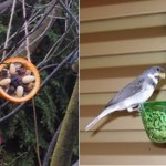 Aprenda a fazer comedouros para passarinhos, e deixe seu jardim mais alegre