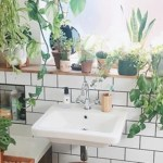 10 plantinhas para decorar seu banheiro.