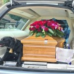 Cãozinho acompanha dono falecido numa última viagem