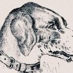 Encontre o homem escondido na imagem do cachorro, o desafio visual que poucos conseguem resolver