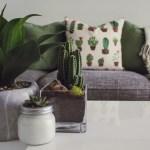 4 melhores plantas para ter em casa