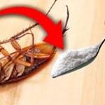Como ficar livre das baratas sem o uso de inseticidas?