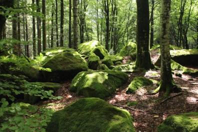 Al bosco delle fate