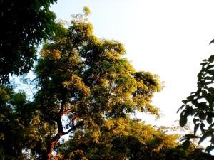 Chronos Byte sample shot tree philippines