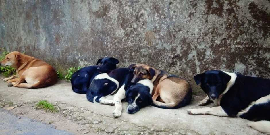 Manipal Street Dogs