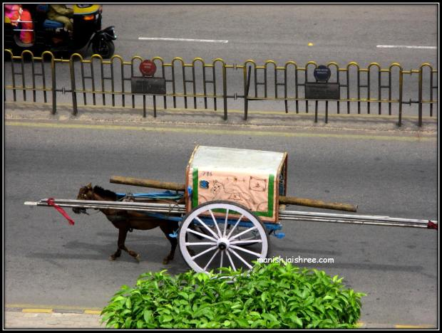 Papa's Horse Cart