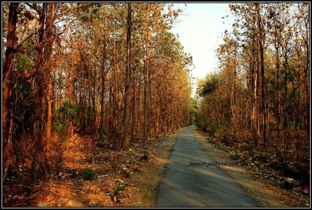 Teak wooded Sitavani