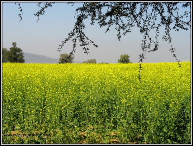 Mustard-Yellow landscape