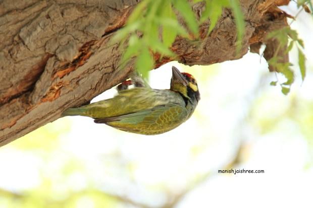 Bird B2